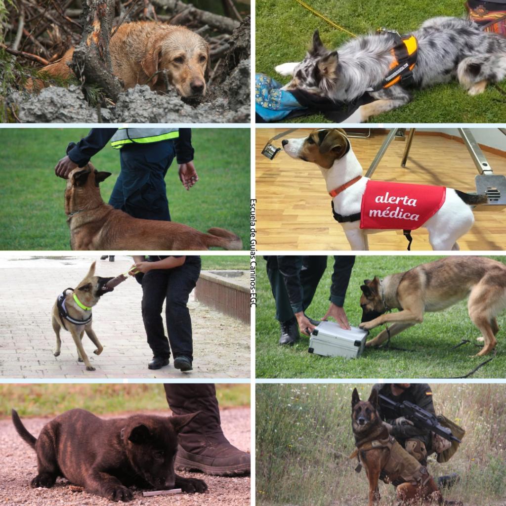 Especialidades caninas